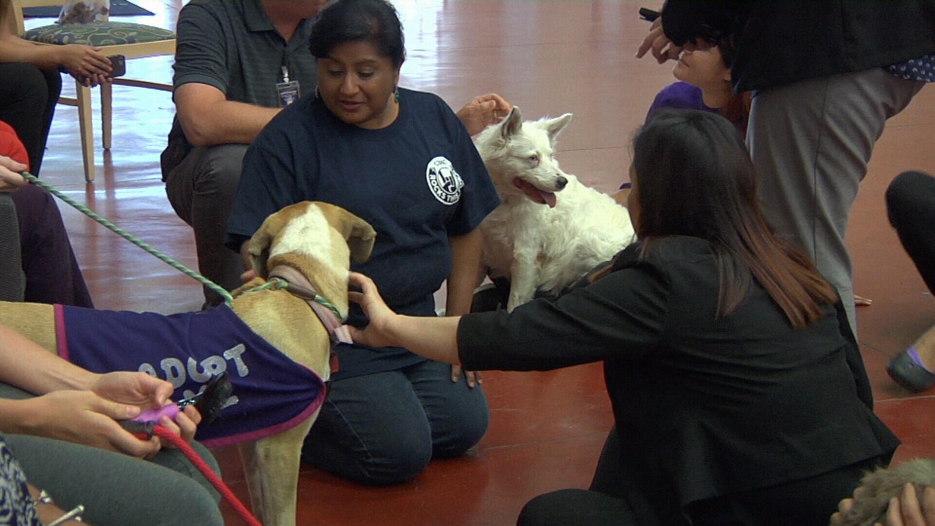Severe infection closes Calgary Humane Society