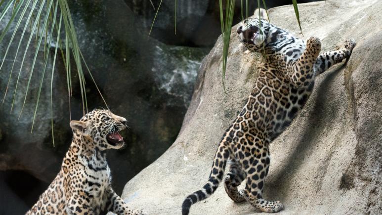 (Stephanie Adams/Houston Zoo)