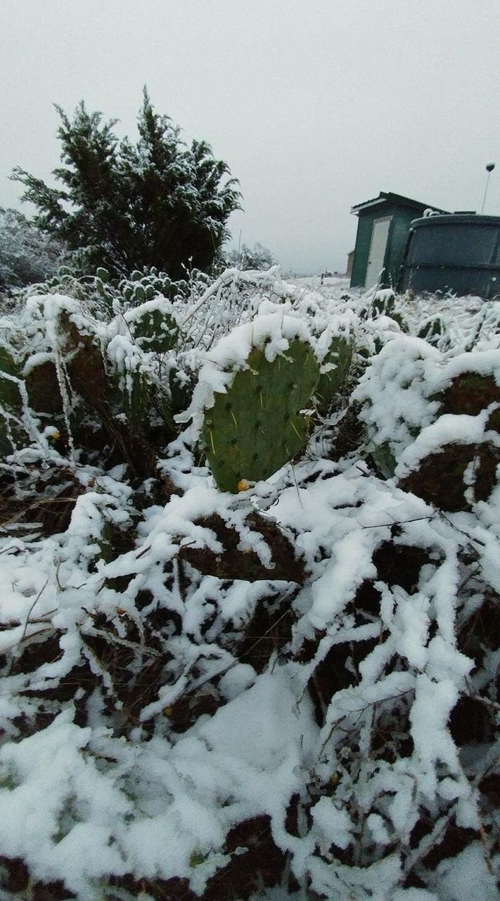 Snow in Cotulla. Thank you Howard Bryan Henderson!