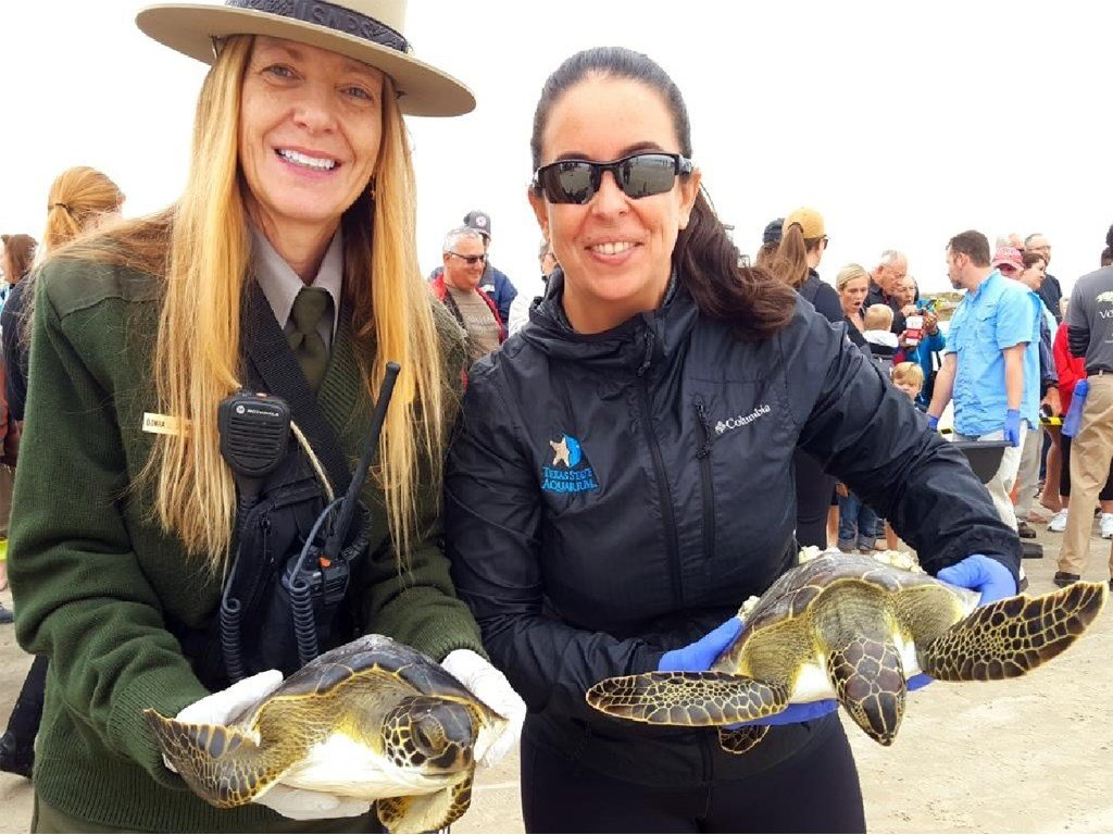 FWC rescues more than 100 cold-stunned sea turtles