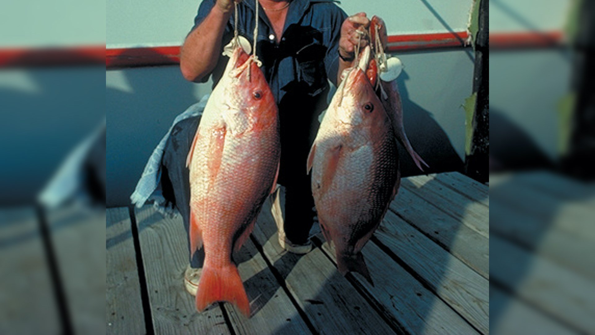 Red Snapper (photo: TPWD)