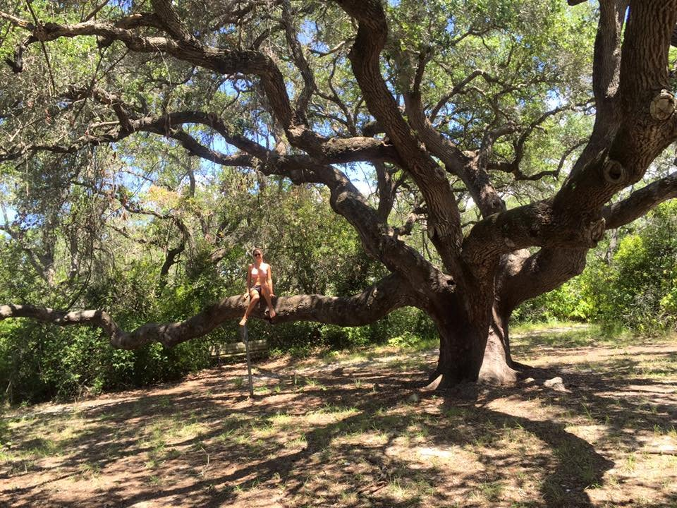 Big Tree has been rooted in Rockport for over 1000 years