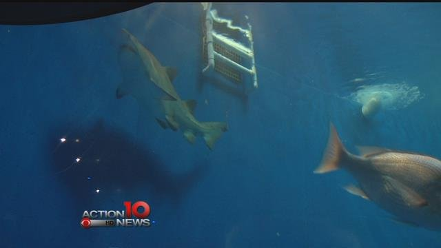 New shark exhibit at the Texas State Aquarium - KZTV10.com ...